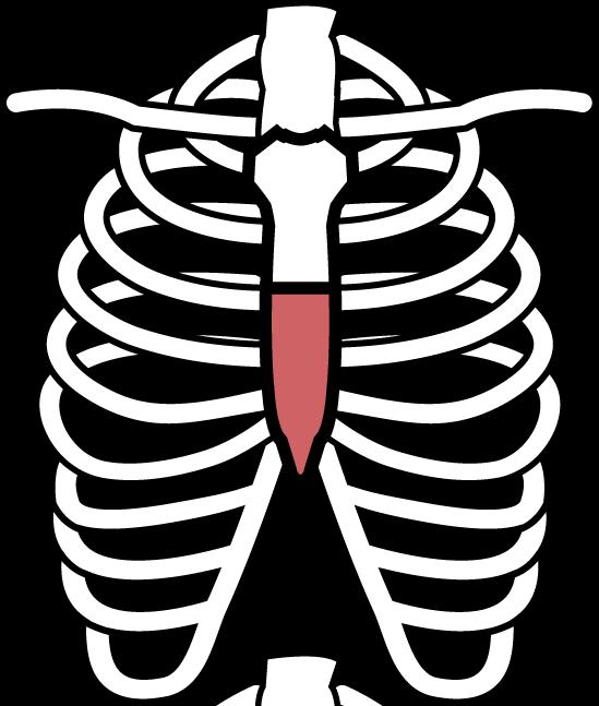 「肋骨 フリー素材」の画像検索結果
